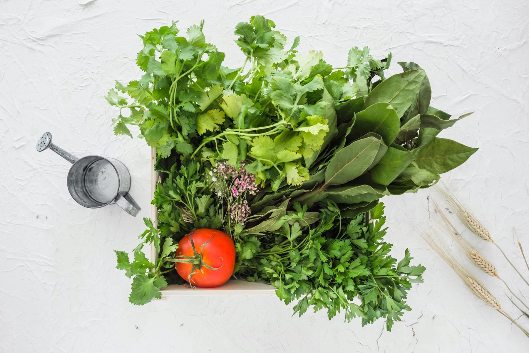 Las mejores plantas comestibles que puedes cultivar si vives en departamento